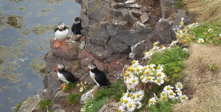 Puffins and flowers. How very nice.