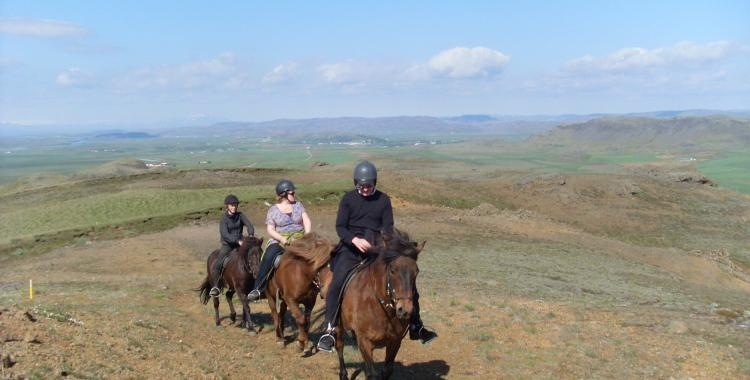 The Icelandic horse has remarkable stamina and is both versatile and nimble.