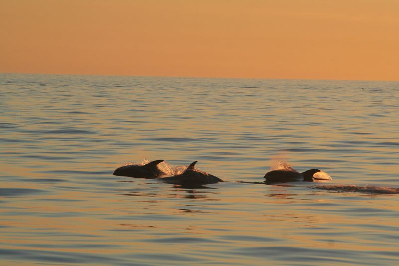 A group of whales on a sunlit summer evening.