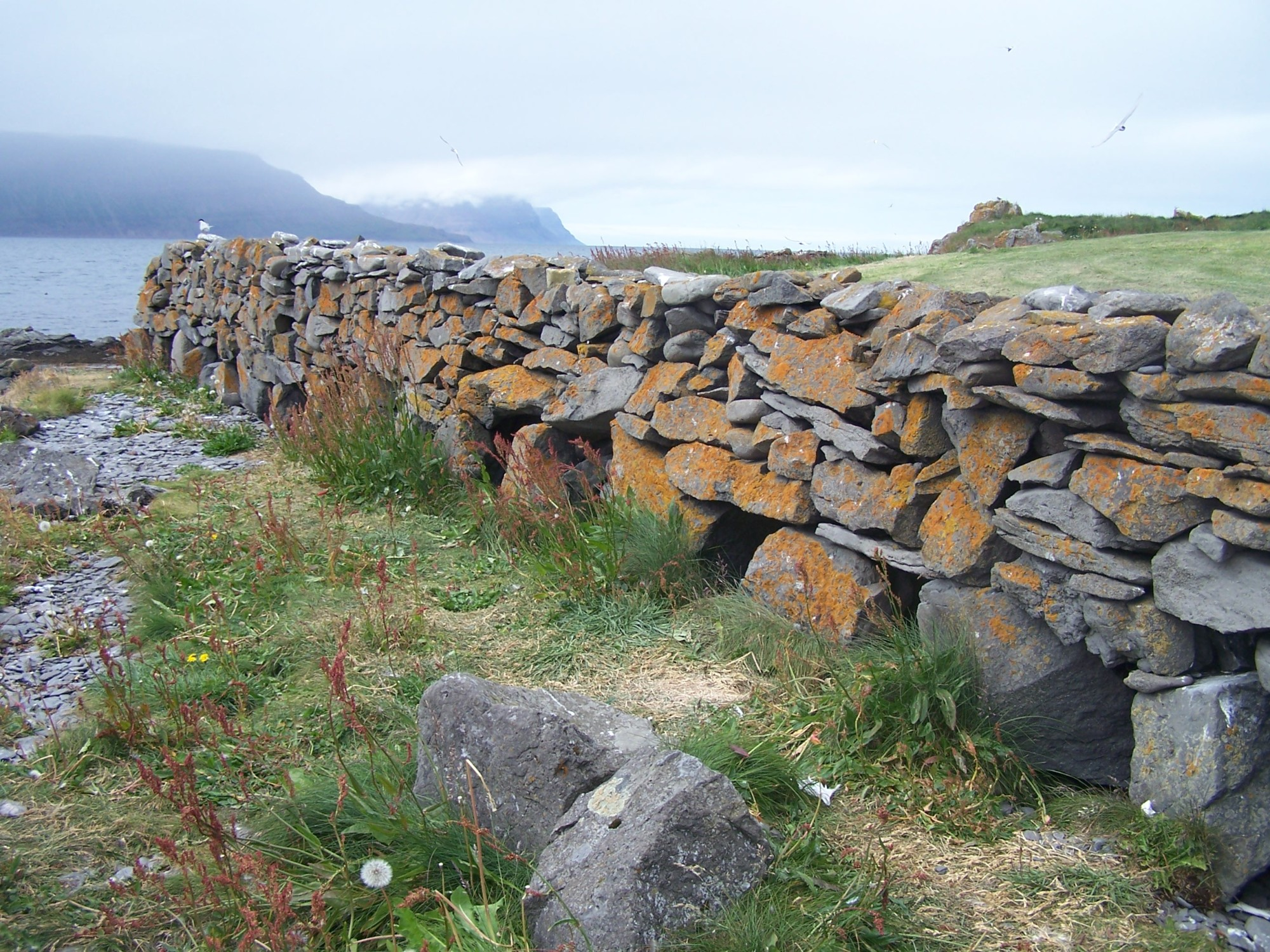 A stone wall provides shelters for the Common Eider. This was constructed over two hundred years ago.