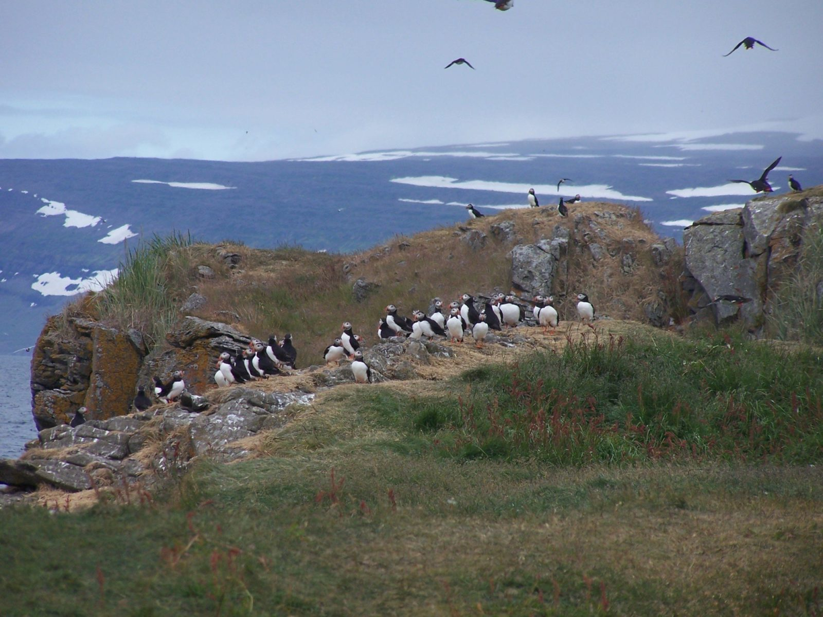 Studies have shown that tourists love puffins. There is no way of knowing whether the puffins love them back.