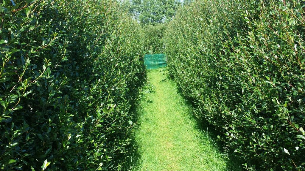 The entry to the hedgerow maze at Engi - enter if you dare!