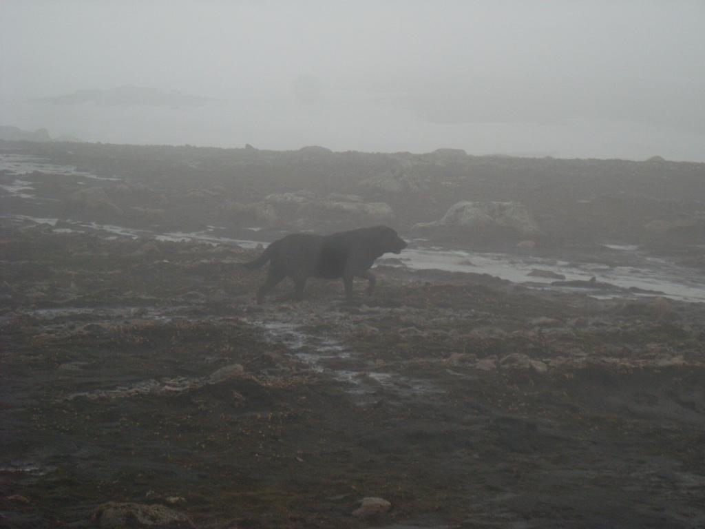 This amazing dog followed us for a long time. I called him Ghost Dog as he raced in and out of the fog.
