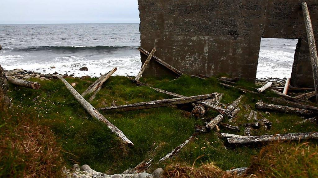 Driftwood in the Langanes peninsula in the northeast of Iceland.