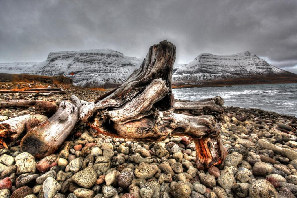 Driftwood along the Strandir coast