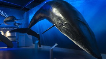 An exhibit at the Whale exhibition
