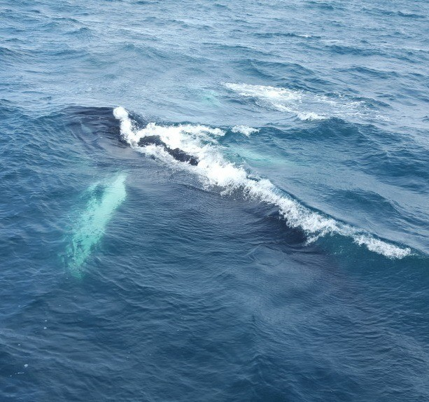 I hit the jackpot. I got a picture of a whale!