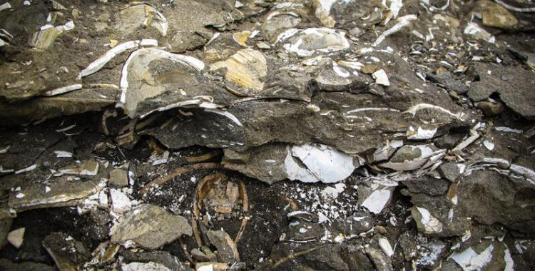 Fossils at Hallbjarnarstaðakambur