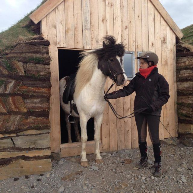 Icelandic horse outside a turf stable.