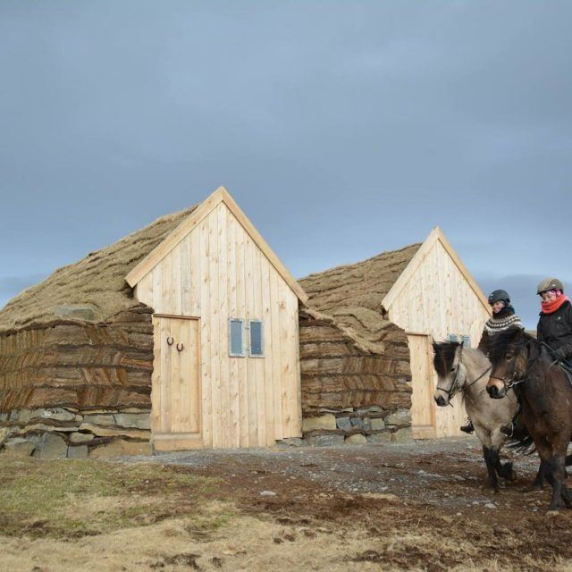 Two ladies ride on Icelandic horses in front of a turf stable.