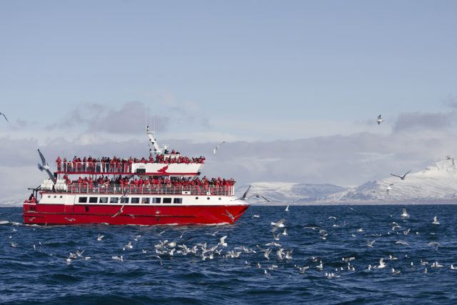 Boat from Elding whale watching company in Iceland. Take advantage of their whale watching offer in Iceland